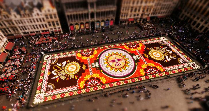 Admira este enorme tapete de un millón de begonias