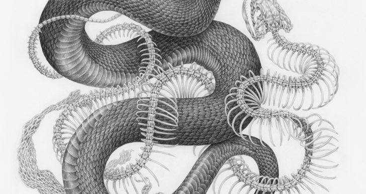 Sinuosos dibujos de serpientes entrelazados con plantas