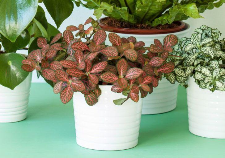 Estas son unas plantas caseras que no podrás matar aunque lo intentes