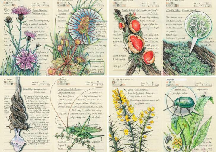 Esta ilustradora documenta la flora y fauna del campo