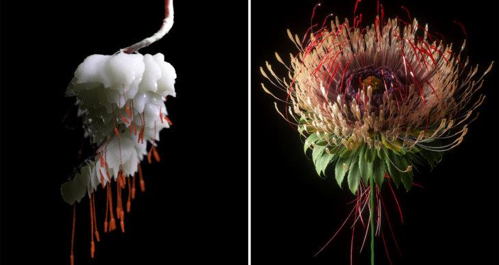 Botánica digital muestra fractales y patrones hipnotizantes