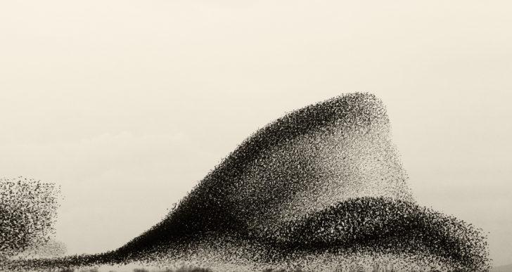 Parvadas de pájaros crean figuras en el cielo en este corto
