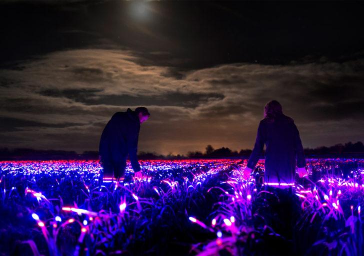 Este artista pone luces en campos de cultivos para estimular su crecimiento