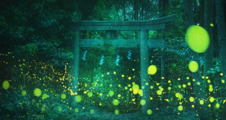 Estas deslumbrantes fotos capturan la suave luz de las luciérnagas