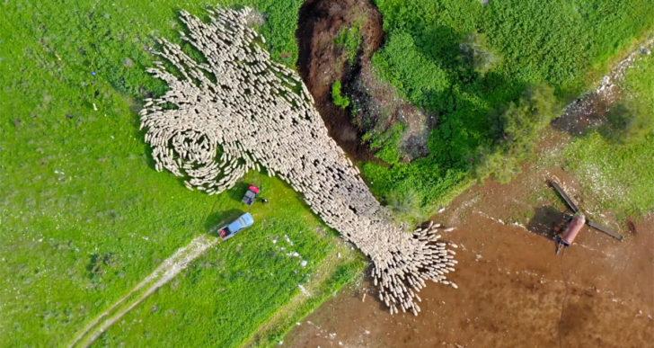 Lior Patel captura increíbles timelapse de un rebaño de ovejas