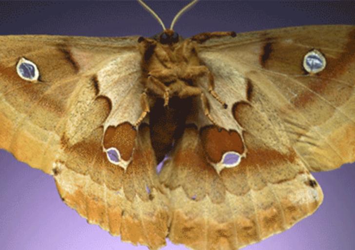 Espectaculares videos en cámara lenta de polillas volando